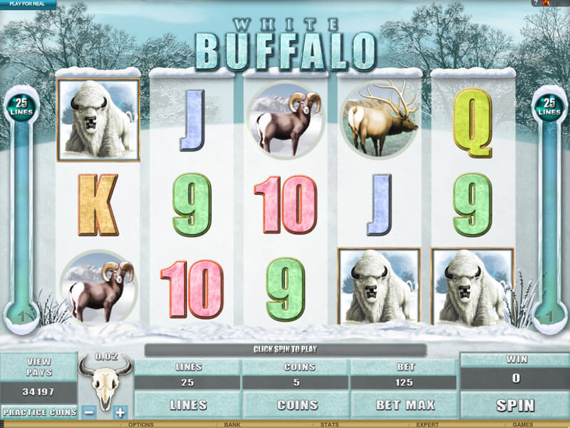White Buffalo New Online Video slot by Amaya Gaming